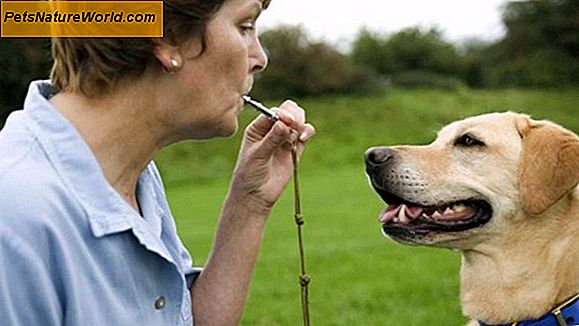 Dog Whistle Training
