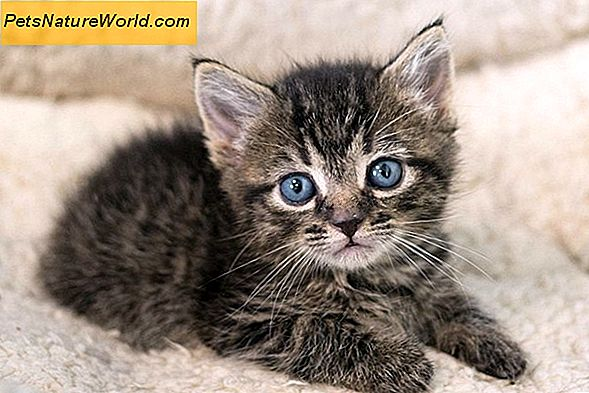 Kitten Diarrhoe Diagnose