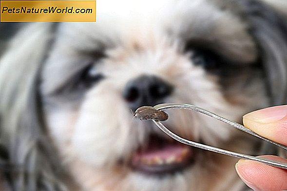 Diagnose Von Nasentumoren Bei Hunden