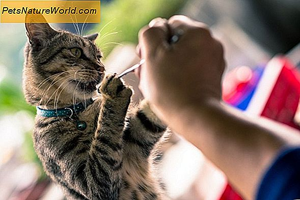 Cat Dander Allergy Treatment