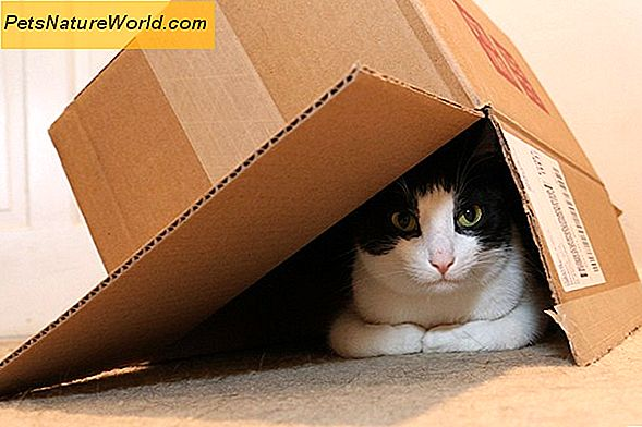 Cat Hiding Behavior Explained