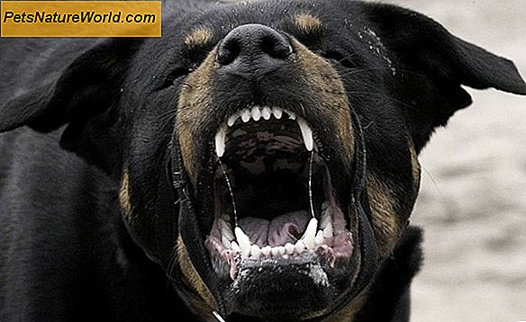 Growling Dog Behavior