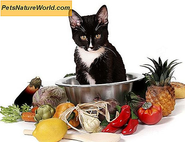 Raw Diet Cat Food