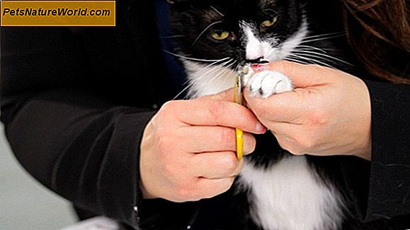 Grooming Cats 'Nails