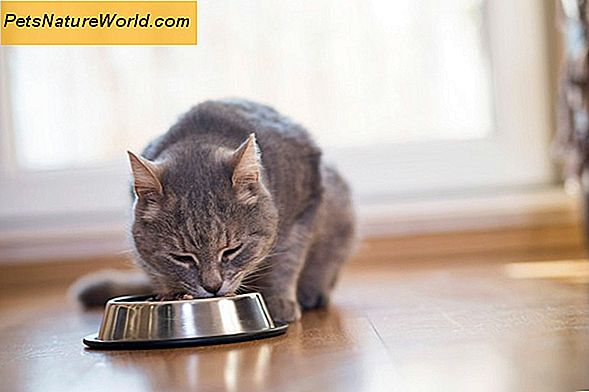 Diet Cat Food