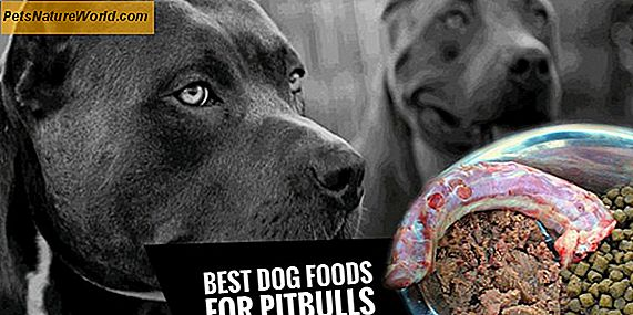 High Protein Foods for Dogs