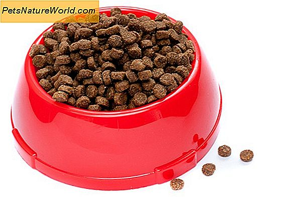 Premium Pet Food Ingredients