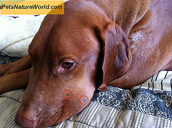 Copperhead Bite Dog Treatment