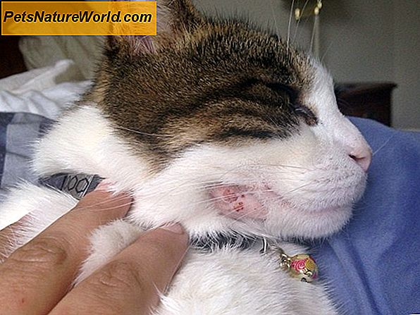 Cat Bite Antibiotics