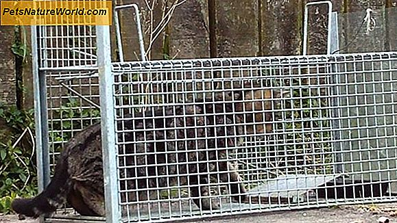 Cat Traps for Feral Cats