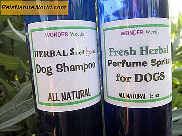 All-Natural Dog Grooming Shampoo