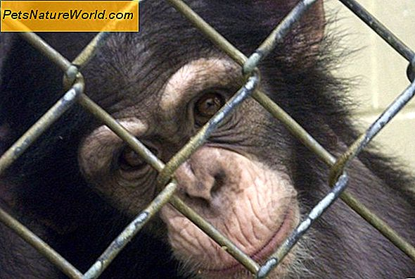 Humane Vivisection Alternativ