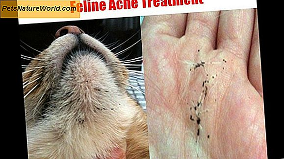 Cat Acne Treatment
