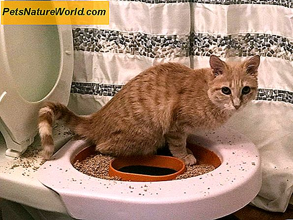 The Toilet Trained Cat: Myth or Fact?