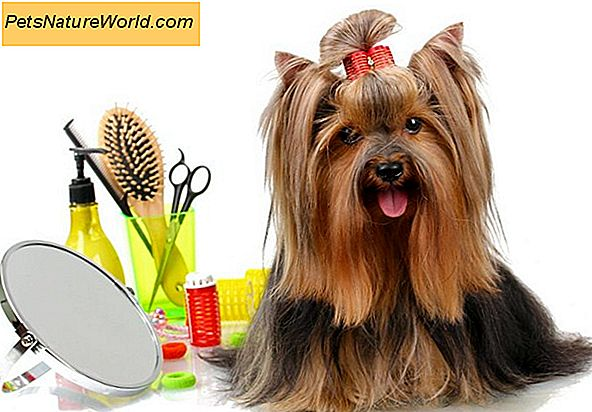 Come diventare Pet Groomer