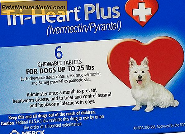 Heartworm-medicatie voor puppy's
