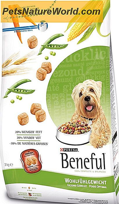 Dry Dog Food for Allergies