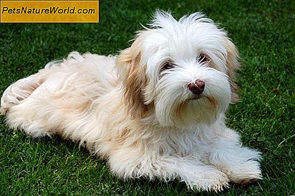 Is Diarree Bij Puppys Een Bijwerking Van Bepaalde Medicijnen