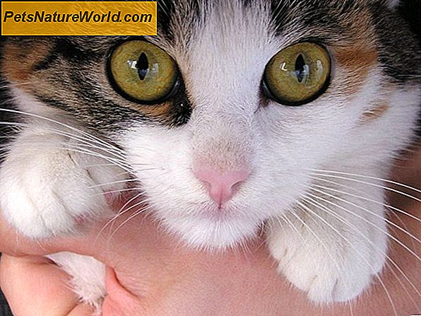 Cat Eye Infection Home Remedies