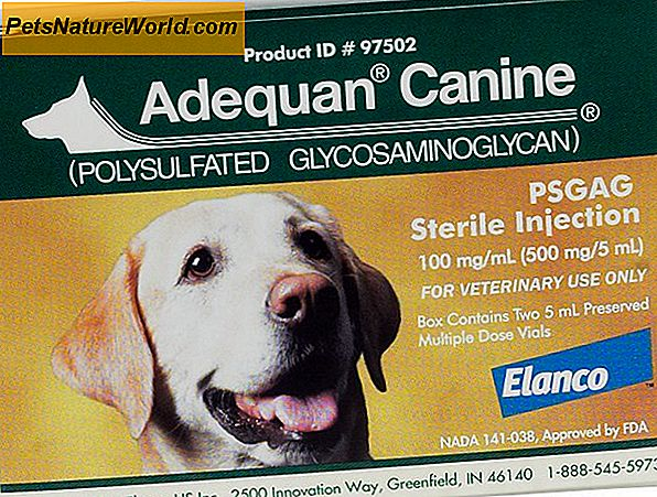 Adequan Canine Side Effects