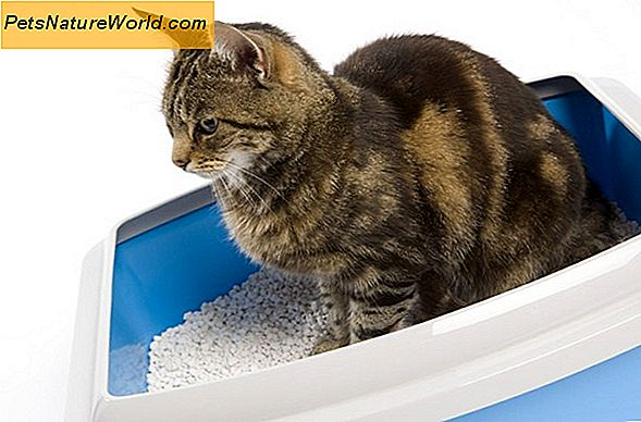 Is Clumping Cat Litter veilig?