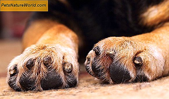 Dog Biting Paws