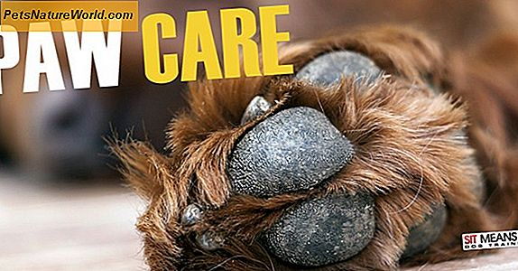 Grooming Tips for Dog Paw Care