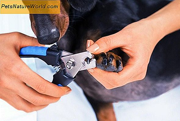 Nail Grooming for Dogs