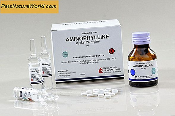 Aminophyllin for hunder