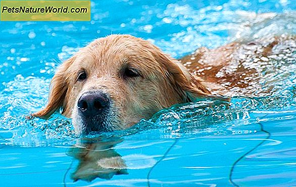 Aquatic Therapy for Dogs