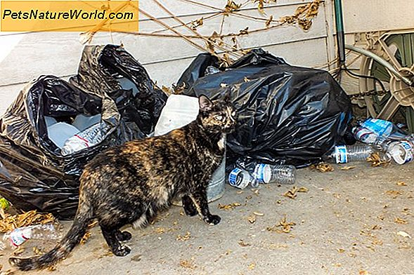 Feral Cat Spay and Neuter Programs