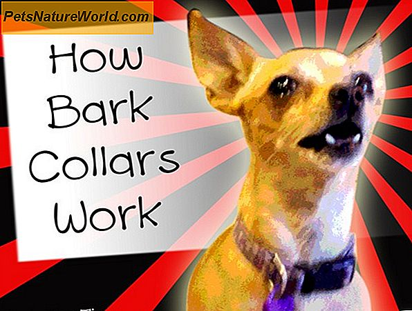 Shock a Citronella Bark Collar Solutions