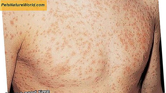 West Nile Virus Symptom hos hundar